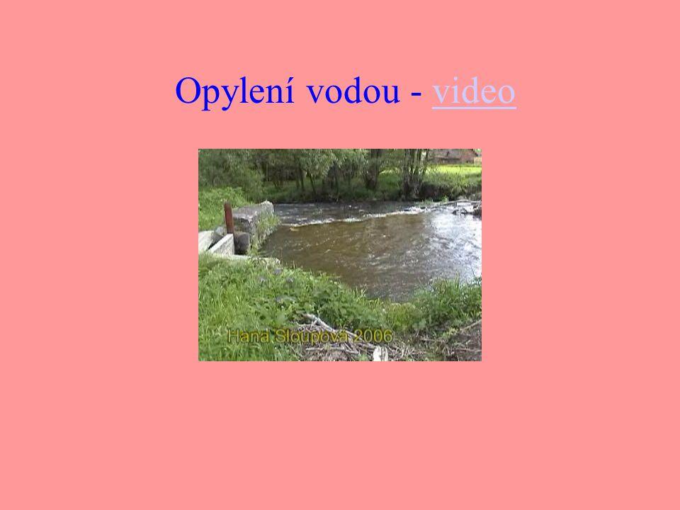 Opylení vodou - video