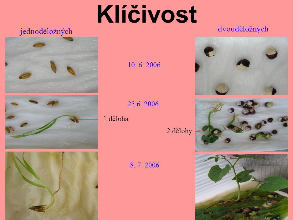 Klíčivost dvouděložných jednoděložných 10. 6. 2006 25.6. 2006 1 děloha