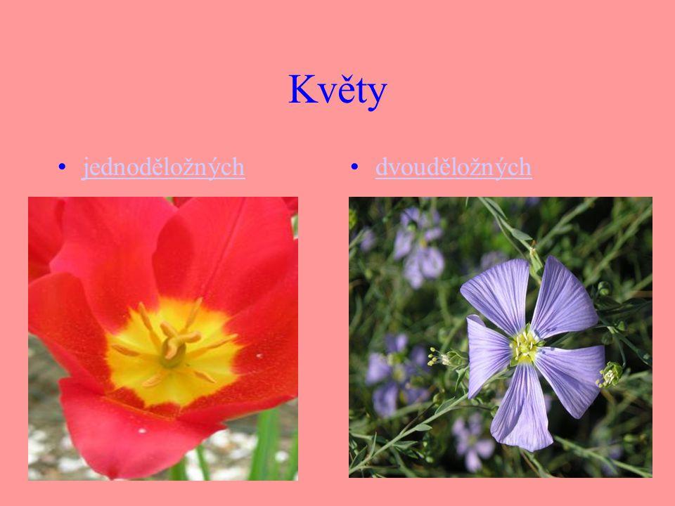Květy jednoděložných dvouděložných