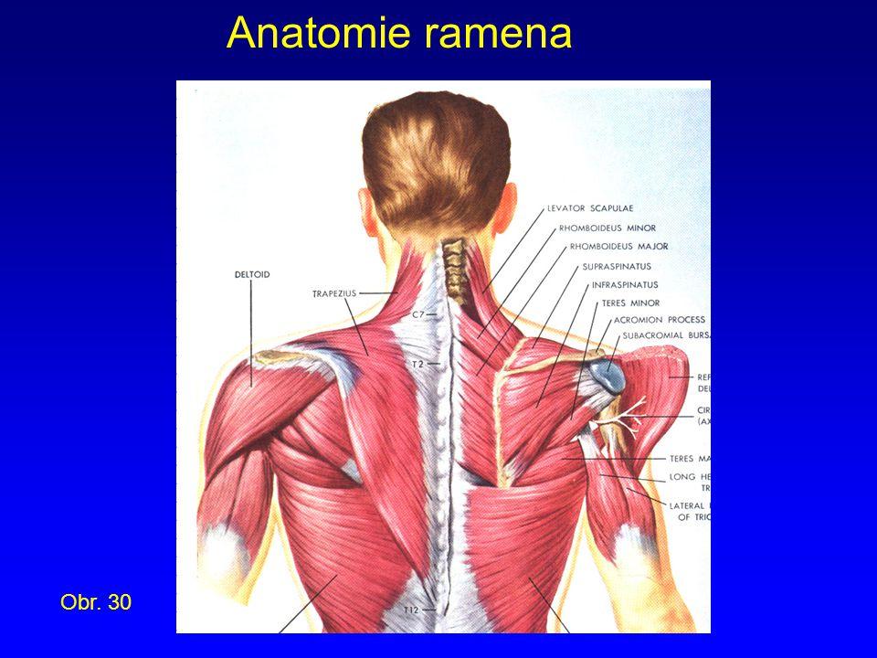 Anatomie ramena Obr. 30