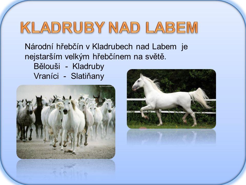 KLADRUBY NAD LABEM Národní hřebčín v Kladrubech nad Labem je nejstarším velkým hřebčínem na světě.