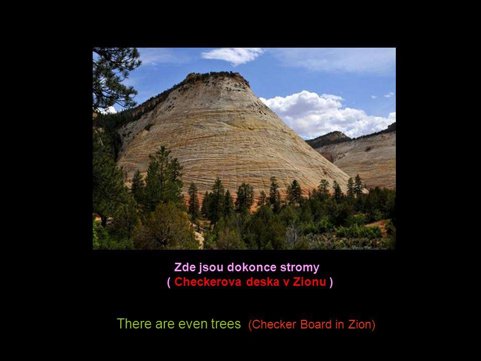 Zde jsou dokonce stromy ( Checkerova deska v Zionu )