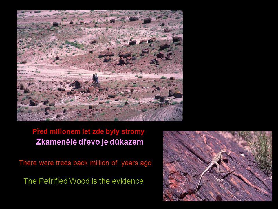 Před milionem let zde byly stromy