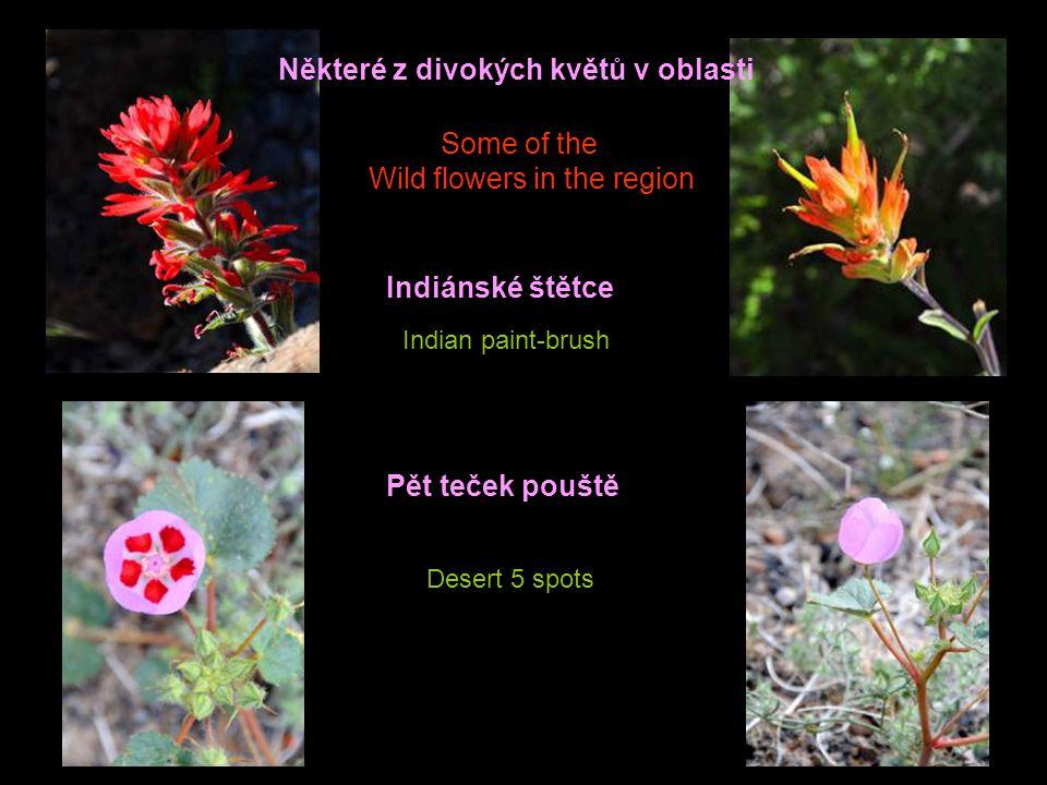 Některé z divokých květů v oblasti