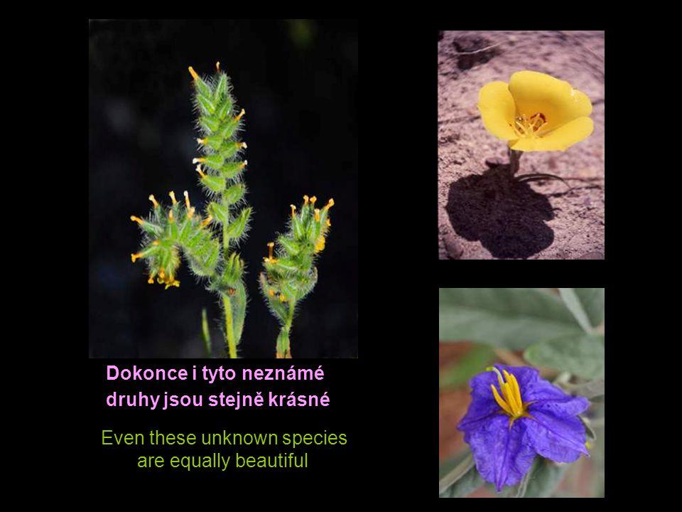 Dokonce i tyto neznámé druhy jsou stejně krásné Even these unknown species are equally beautiful