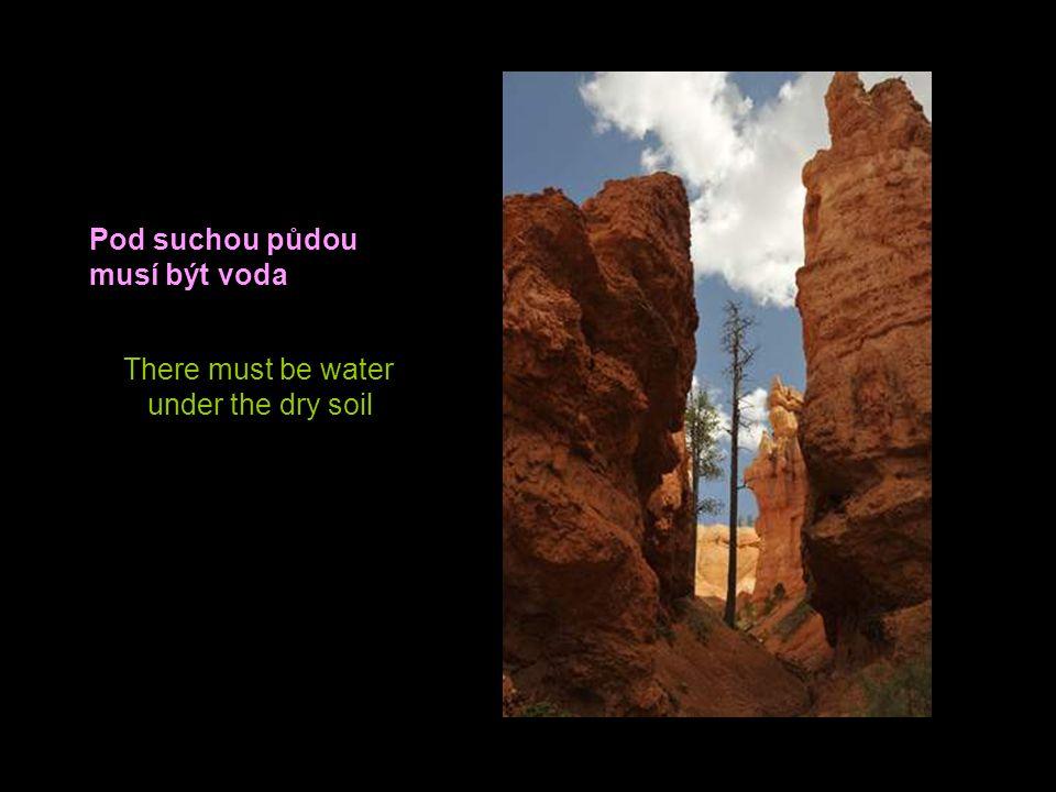 Pod suchou půdou musí být voda There must be water under the dry soil