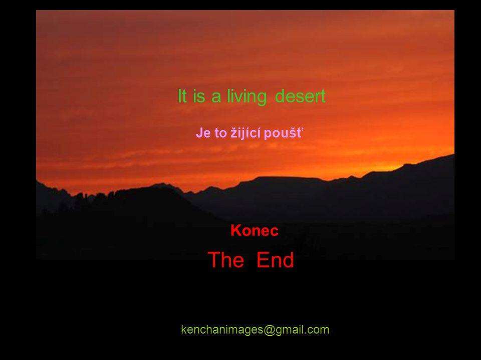 The End It is a living desert Konec Je to žijící poušť