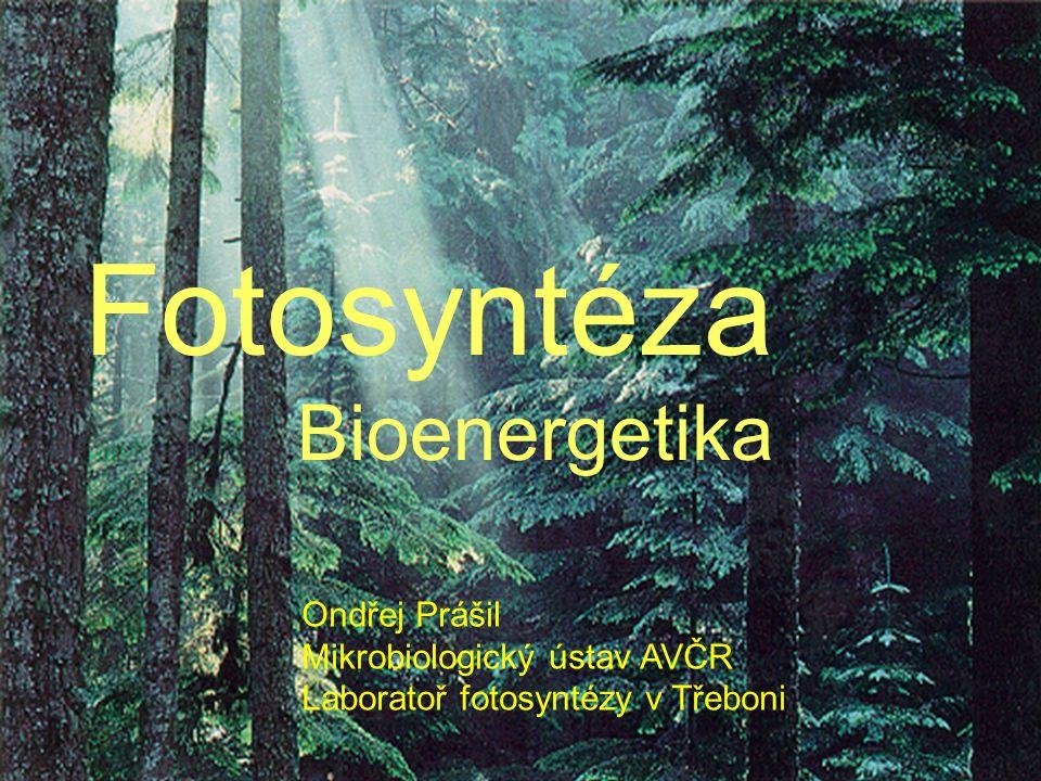 Fotosyntéza Bioenergetika Ondřej Prášil Mikrobiologický ústav AVČR