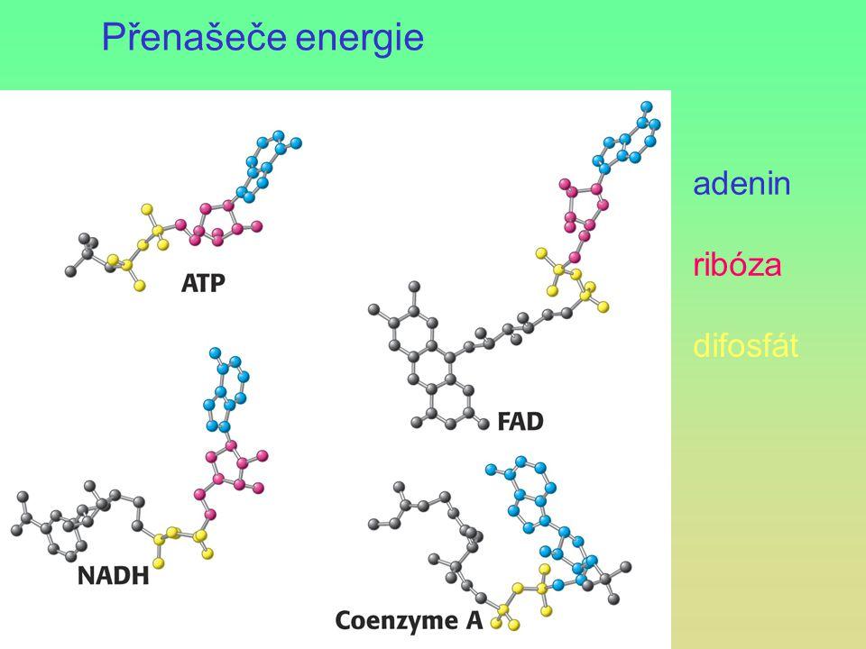 Přenašeče energie adenin ribóza difosfát