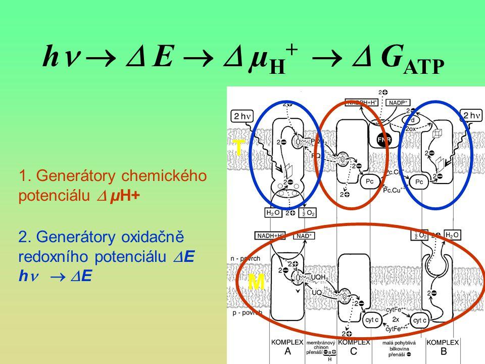 hn   E   µH+   GATP T. 1. Generátory chemického potenciálu  µH+ 2. Generátory oxidačně redoxního potenciálu E.