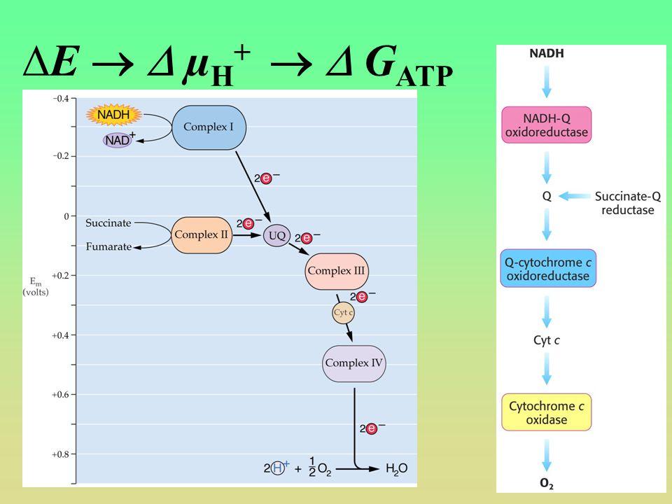 E   µH+   GATP