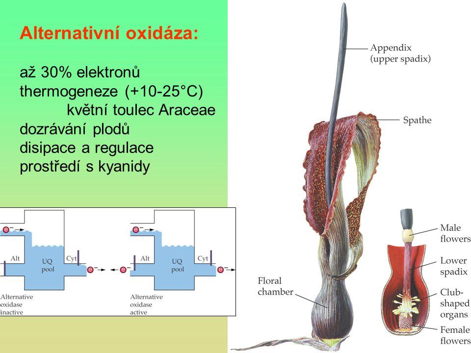 Alternativní oxidáza: