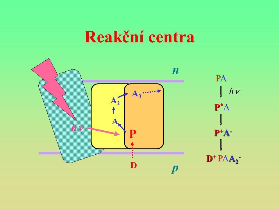 Reakční centra P A A2 A3 hn p n PA P*A P+A- D+ PAA2- D