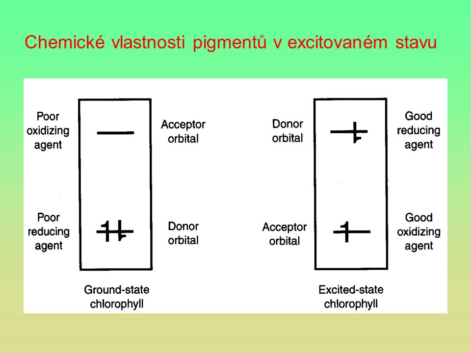 Chemické vlastnosti pigmentů v excitovaném stavu