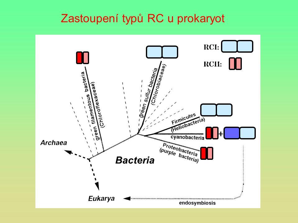 Zastoupení typů RC u prokaryot