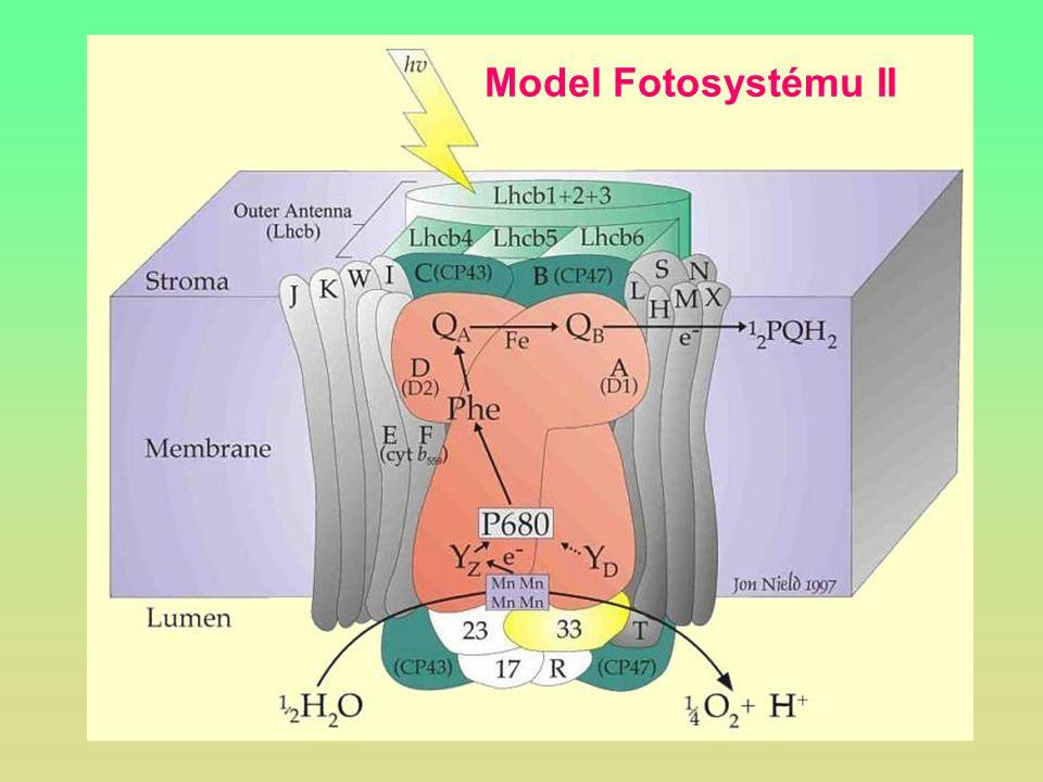 Model Fotosystému II