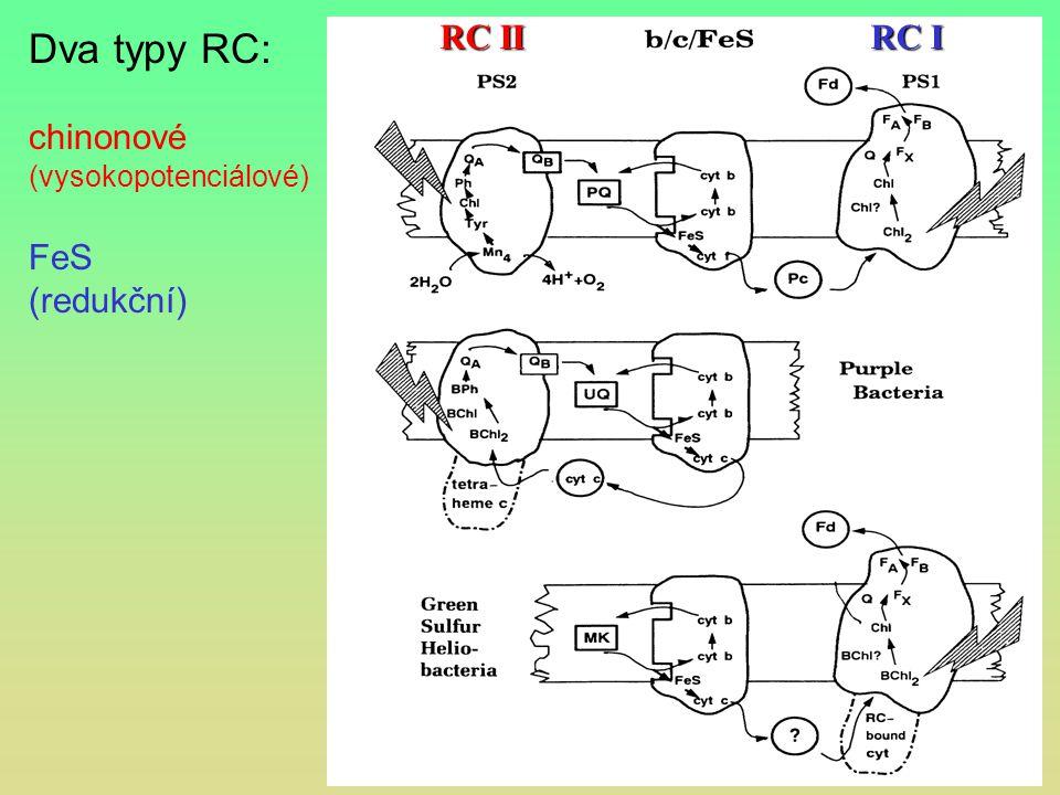 RC II RC I Dva typy RC: chinonové (vysokopotenciálové) FeS (redukční)