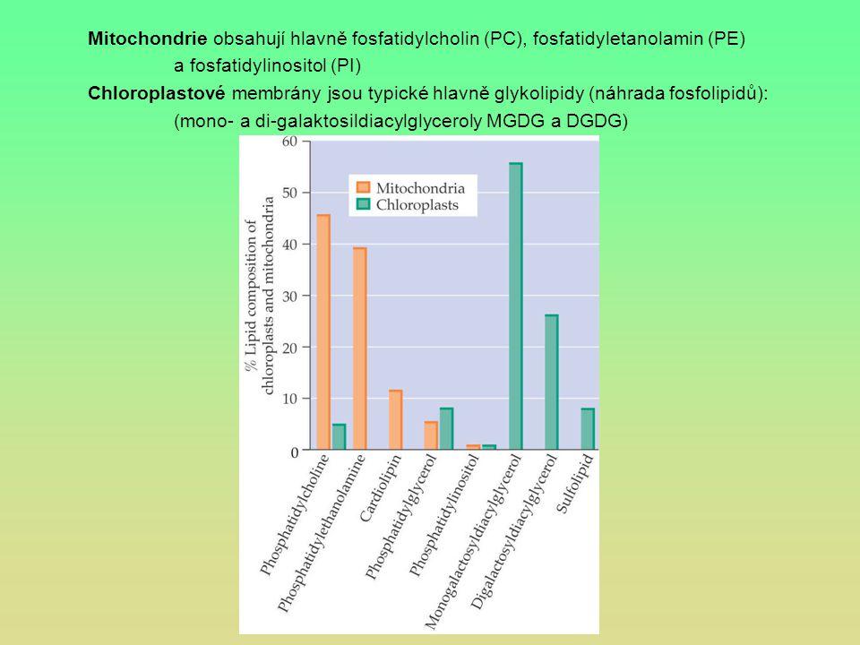 Mitochondrie obsahují hlavně fosfatidylcholin (PC), fosfatidyletanolamin (PE)