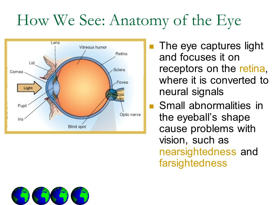 How We See: Anatomy of the Eye