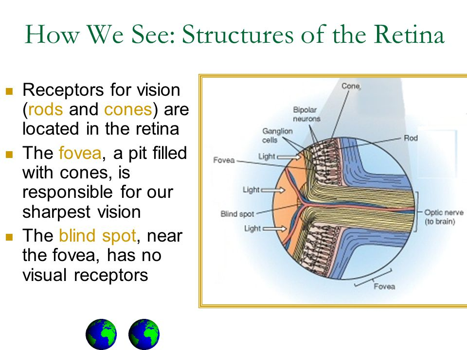 How We See: Structures of the Retina