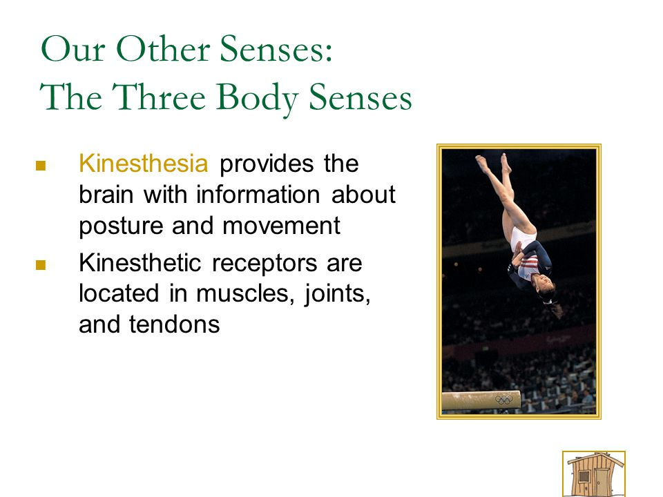 Our Other Senses: The Three Body Senses