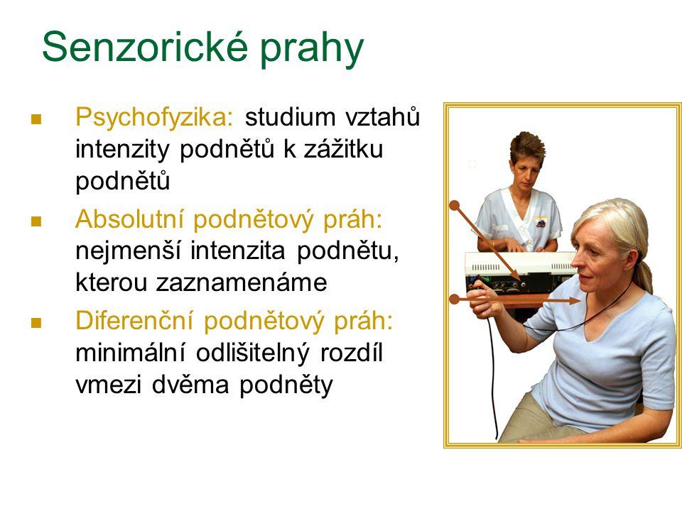 Senzorické prahy Psychofyzika: studium vztahů intenzity podnětů k zážitku podnětů.