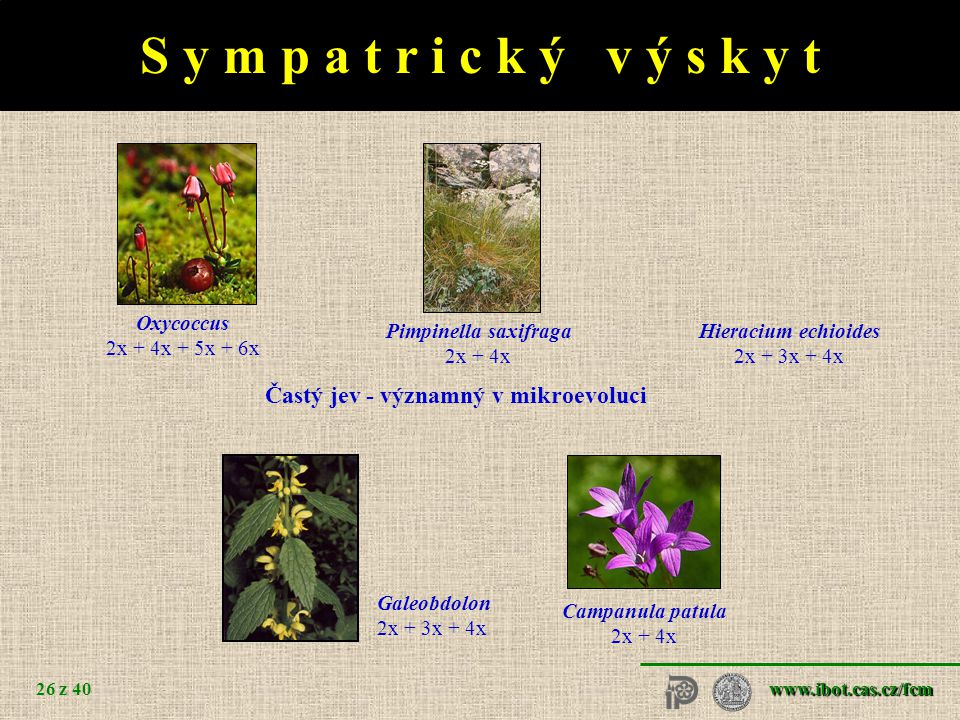O h r o ž e n é d r u h y Gymnadenia conopsea