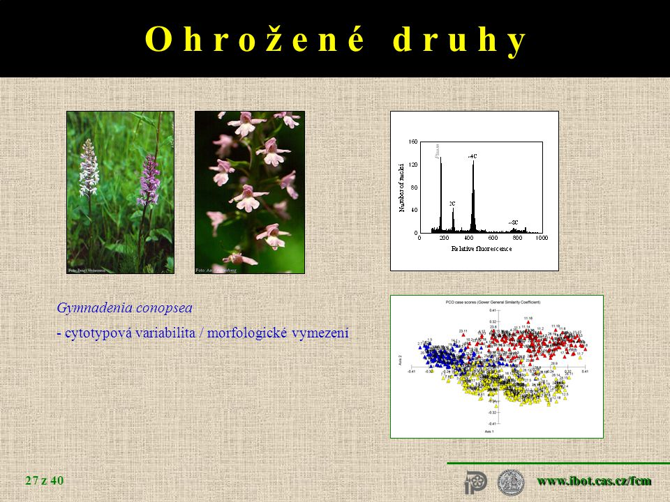 O h r o ž e n é d r u h y Cerastium alsinifolium