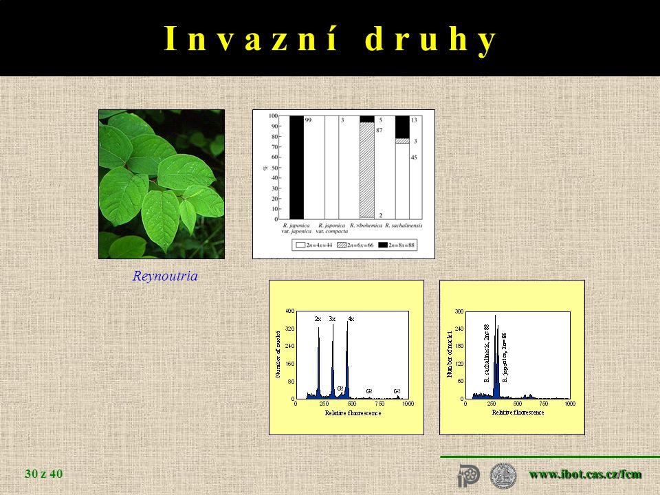 Heuchera grossulariifolia
