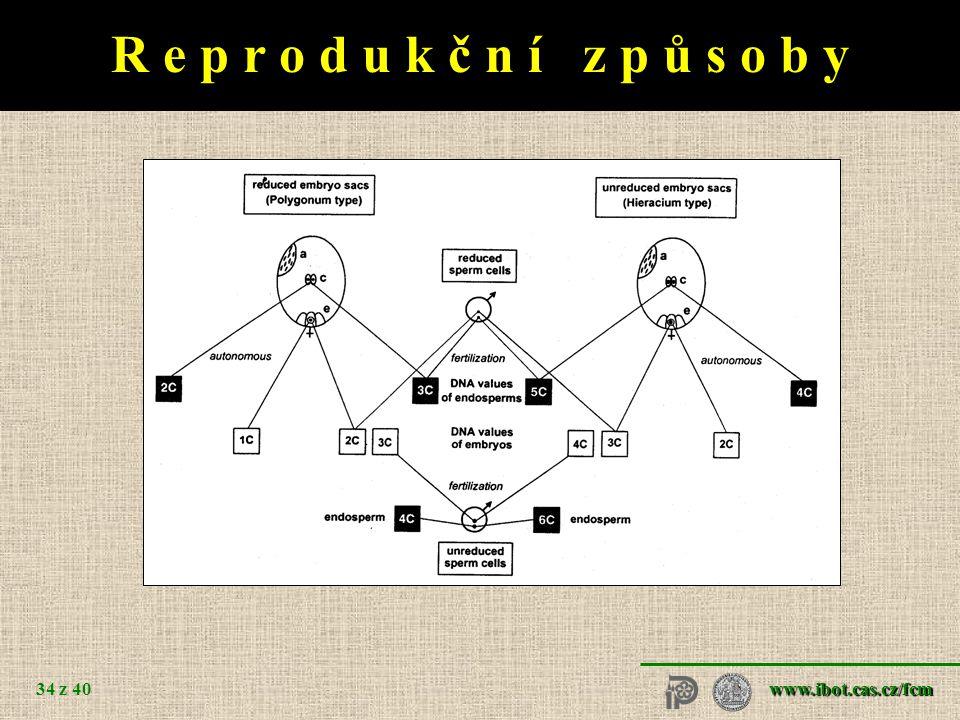 R e p r o d u k č n í z p ů s o b y Taraxacum Hypericum sexuál apomikt