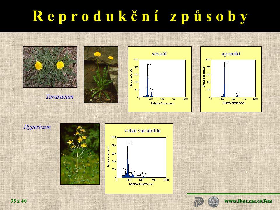 morfologická variabilita genetická variabilita