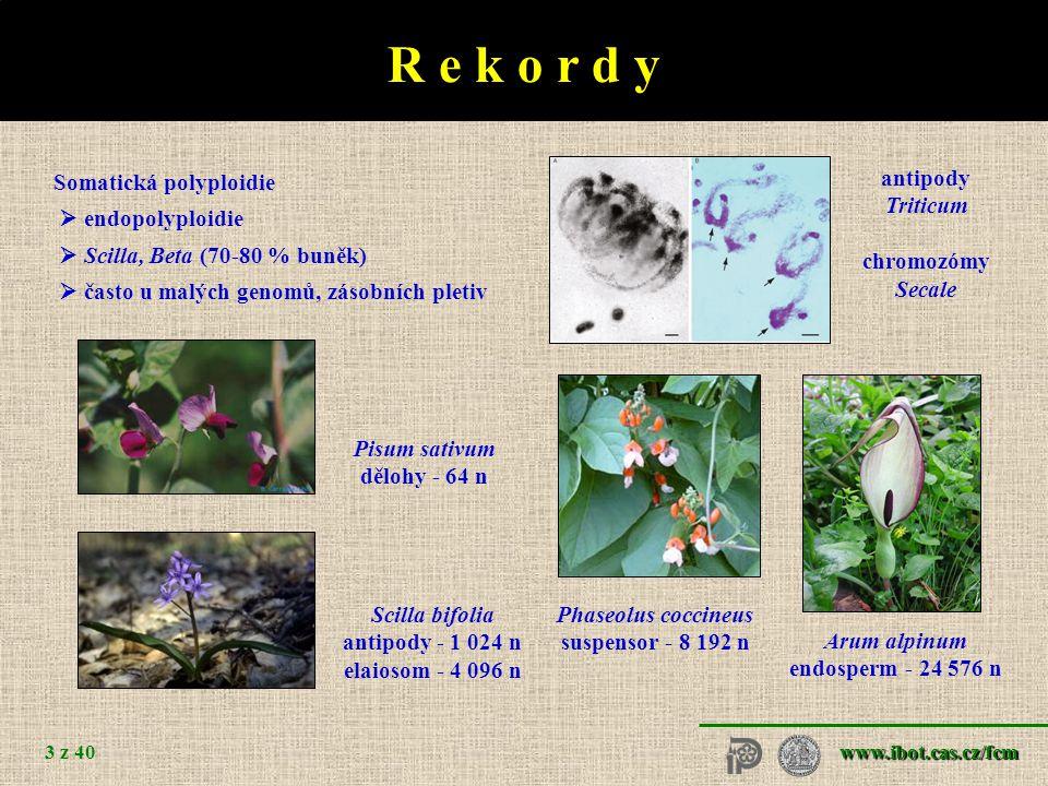 R e k o r d y Velikost genomu - pg DNA / Mbp Arabidopsis thaliana