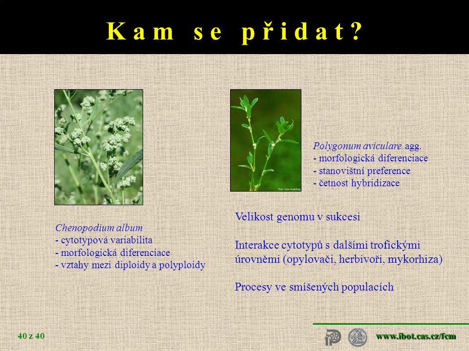 www.ibot.cas.cz/fcm