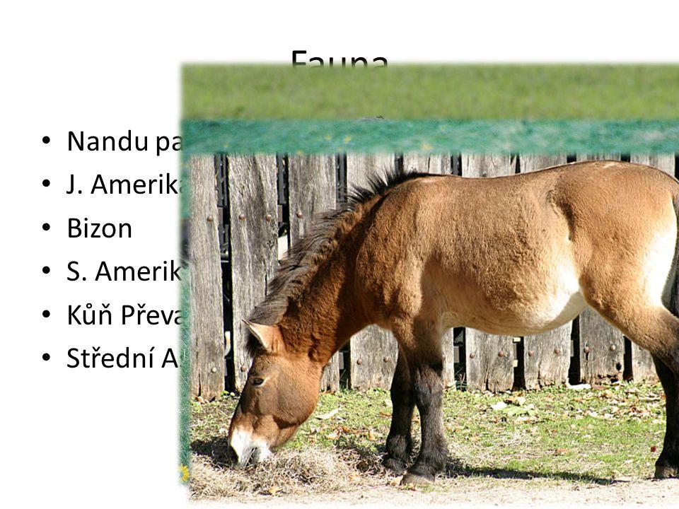 Fauna Nandu pampový J. Amerika Bizon S. Amerika Kůň Převalského