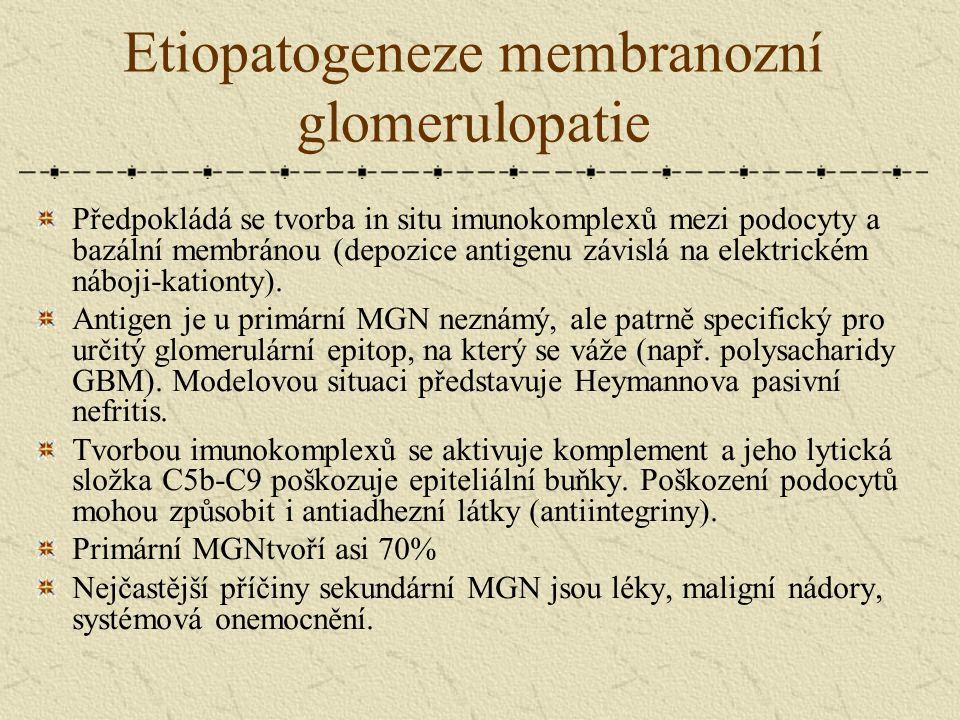 Etiopatogeneze membranozní glomerulopatie