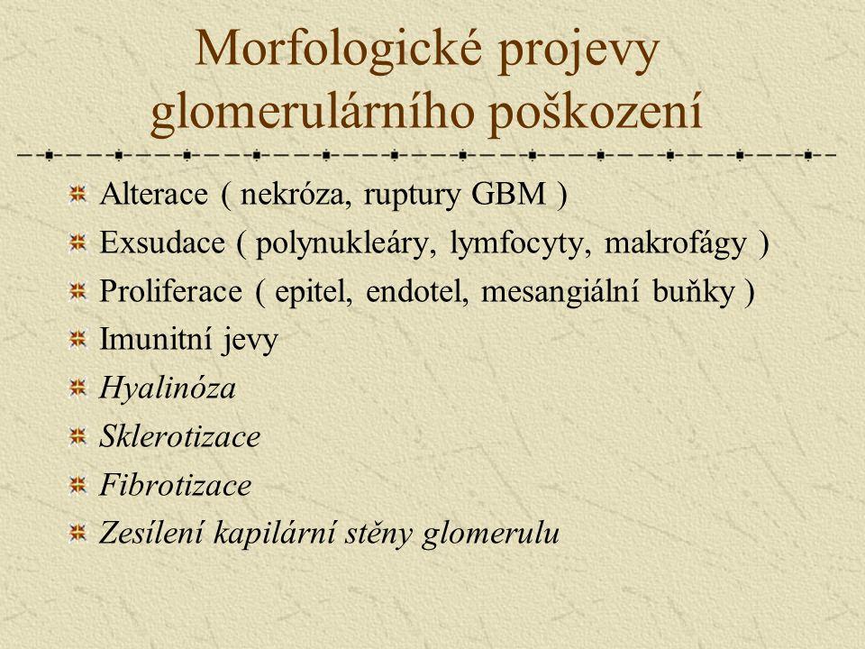 Morfologické projevy glomerulárního poškození