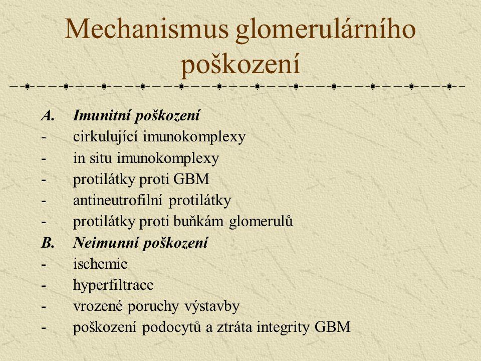 Mechanismus glomerulárního poškození