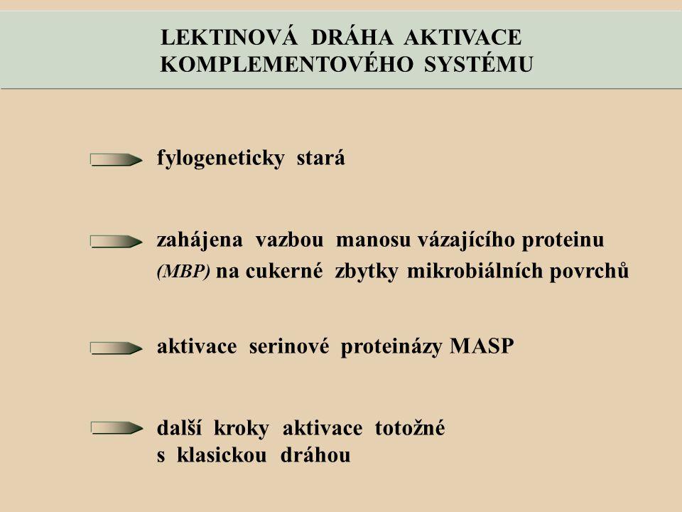 LEKTINOVÁ DRÁHA AKTIVACE KOMPLEMENTOVÉHO SYSTÉMU