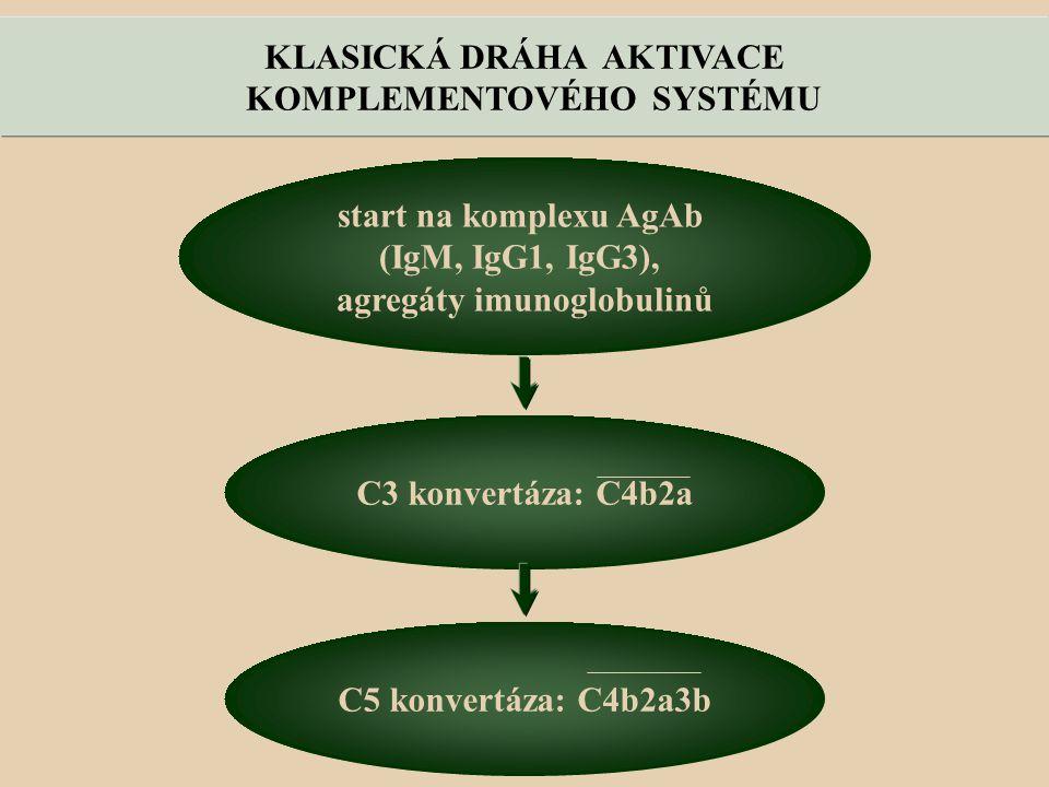 KOMPLEMENTOVÉHO SYSTÉMU agregáty imunoglobulinů