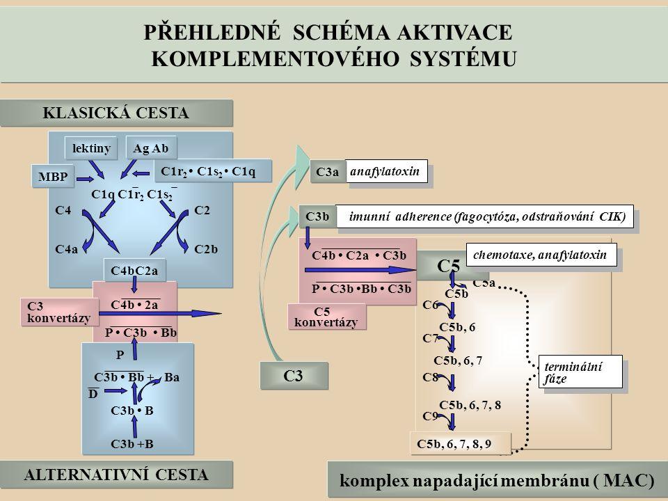 komplex napadající membránu ( MAC) KOMPLEMENTOVÉHO SYSTÉMU