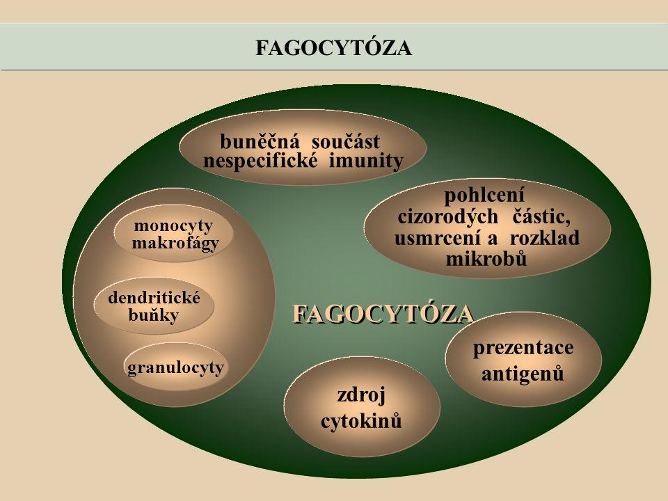 FAGOCYTÓZA buněčná součást nespecifické imunity pohlcení