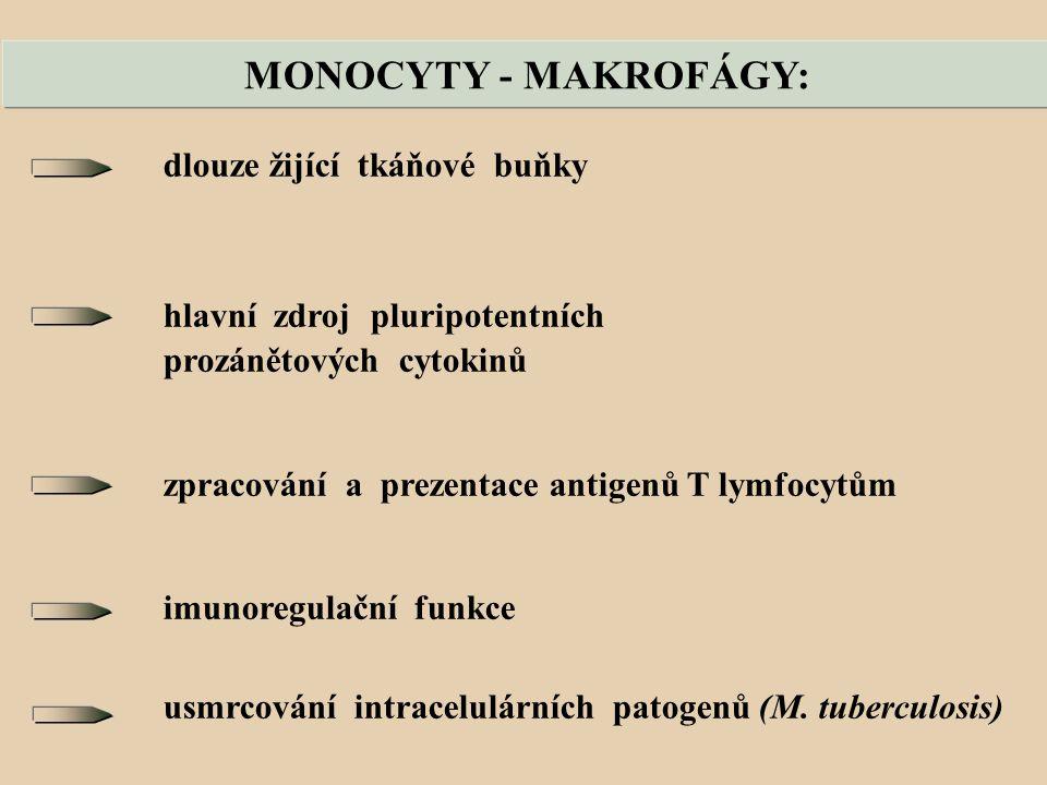 MONOCYTY - MAKROFÁGY: dlouze žijící tkáňové buňky