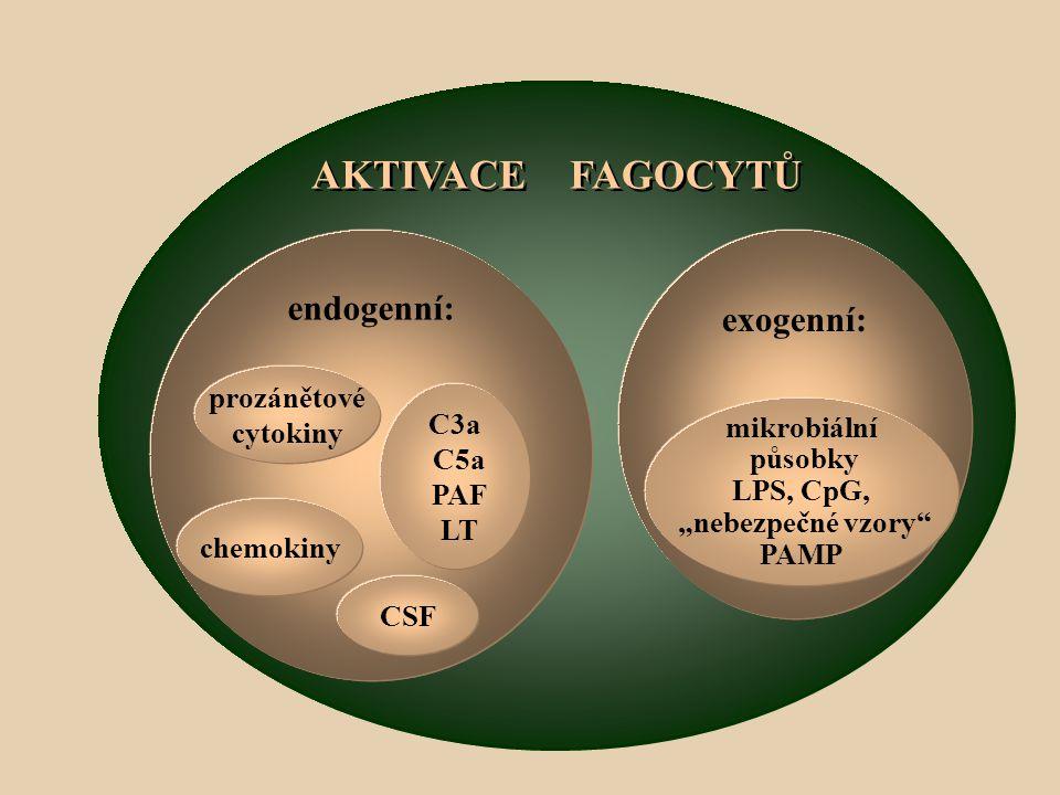 AKTIVACE FAGOCYTŮ endogenní: exogenní: prozánětové cytokiny C3a