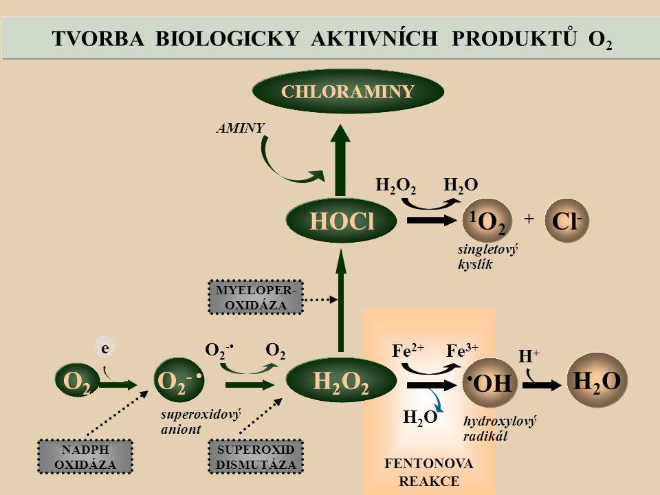 TVORBA BIOLOGICKY AKTIVNÍCH PRODUKTŮ O2
