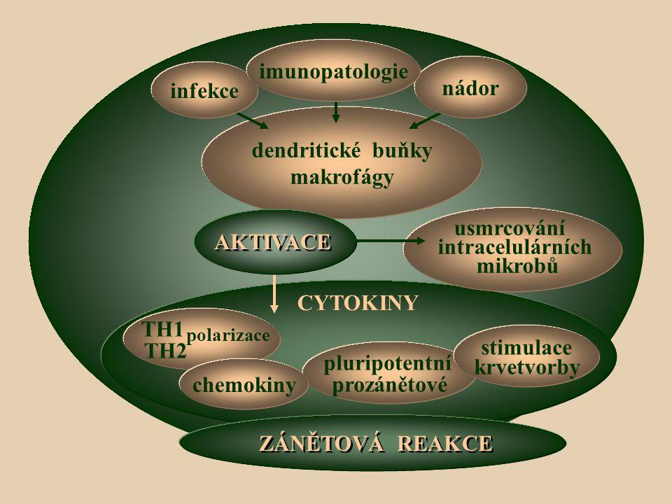 imunopatologie nádor infekce dendritické buňky makrofágy usmrcování