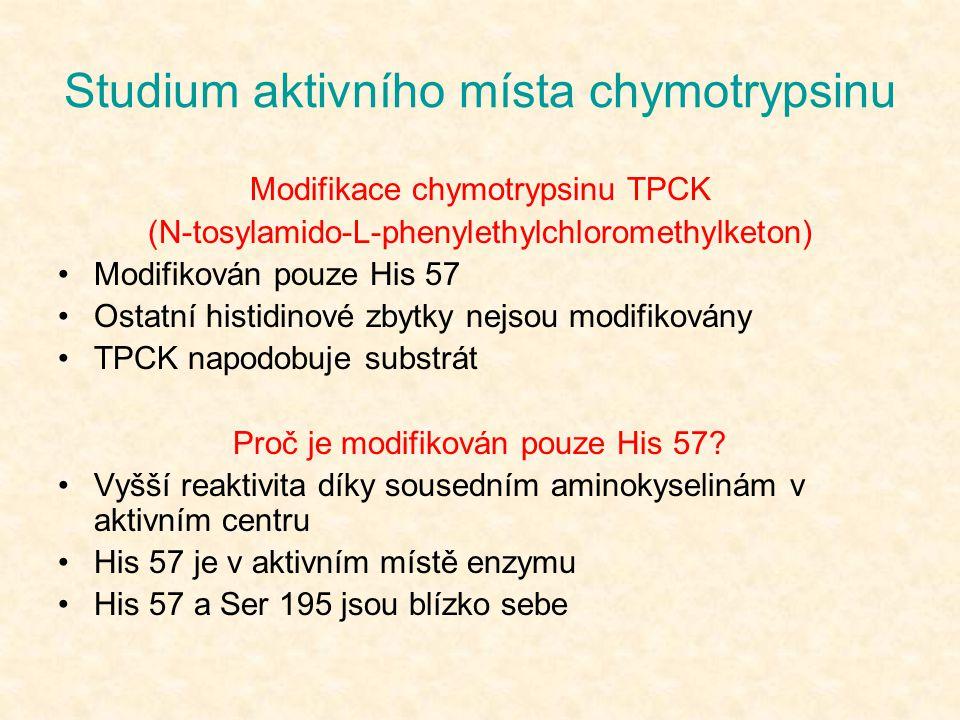 Studium aktivního místa chymotrypsinu