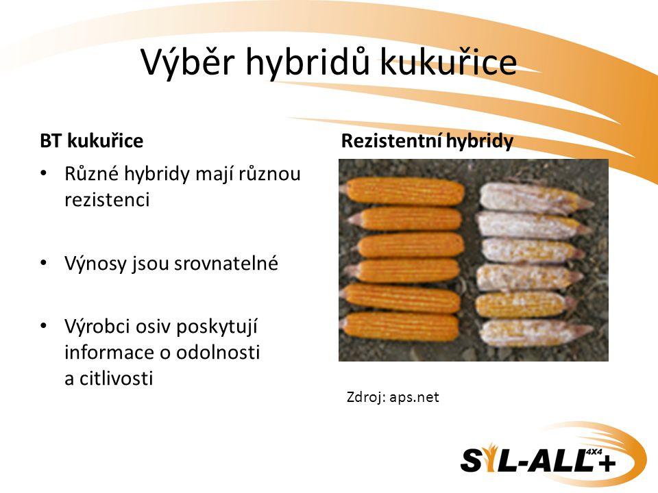 Výběr hybridů kukuřice