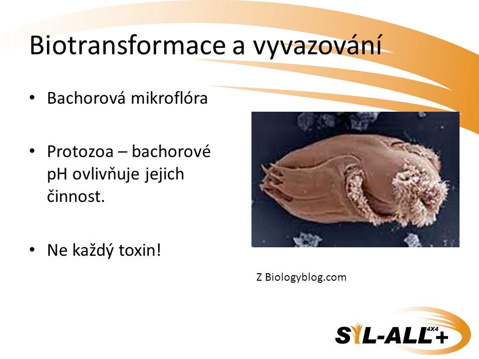 Biotransformace a vyvazování