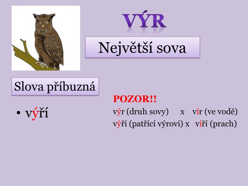 VÝR Největší sova výří Slova příbuzná POZOR!!