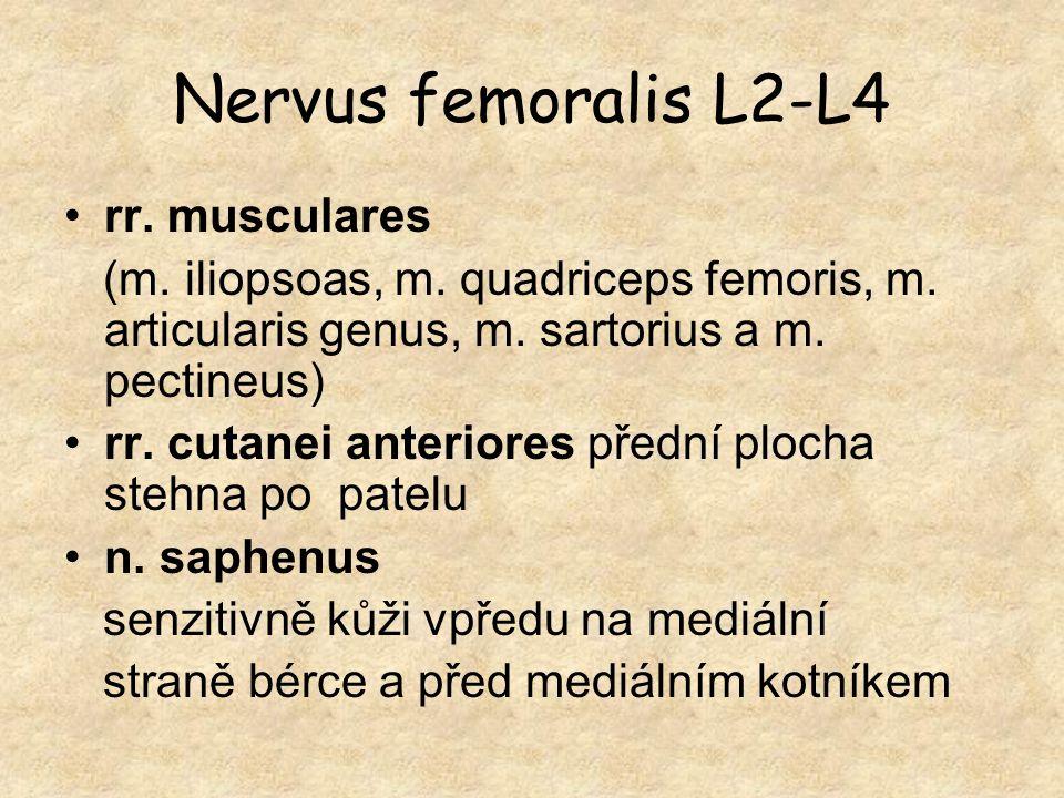 Nervus femoralis L2-L4 rr. musculares